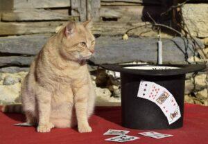 Rouky magicien